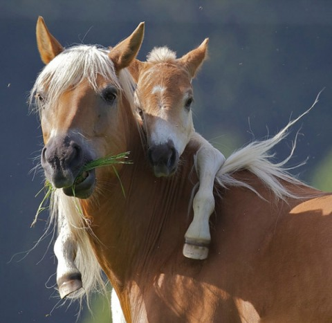 Horse and Baby